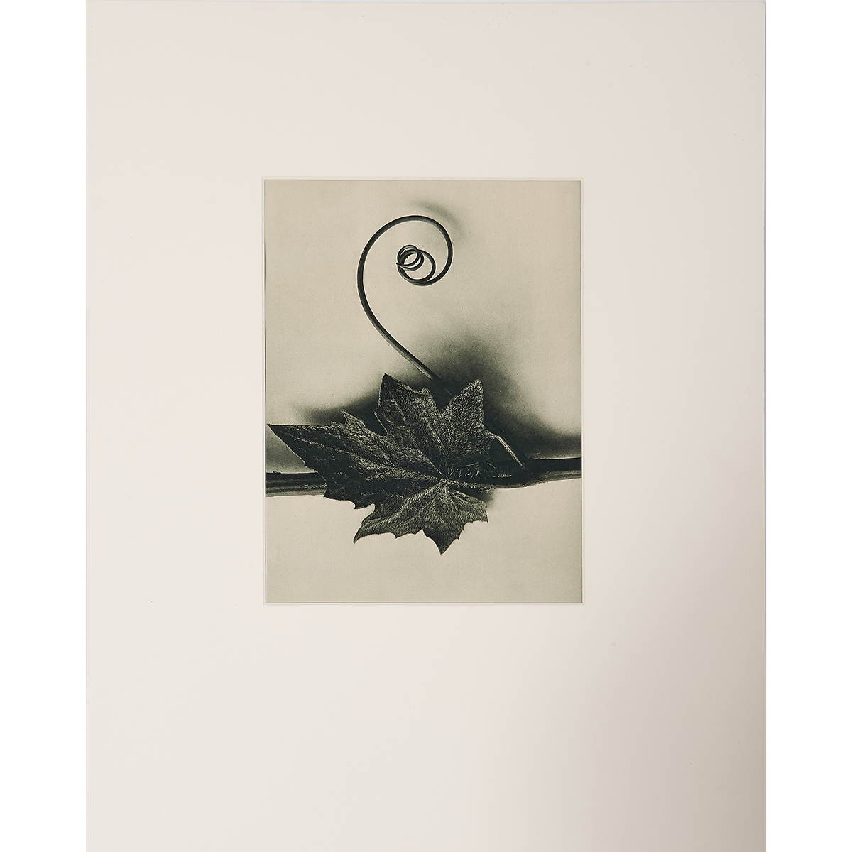 "Karl Blossfeldt, (German, 1865-1932), Untitled, photogravure on book page 49, 10"" x 7 1/2"""